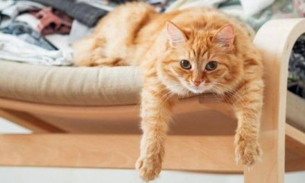 The Ultimate Guide Why Your Cat Peeing On Clothes And Towels