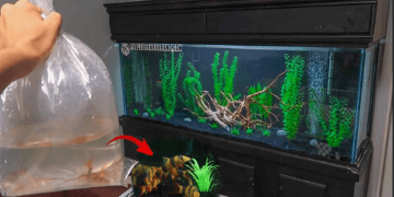 Putting New Fish In A Tank | The Right Ways To Add Fish In A Tank