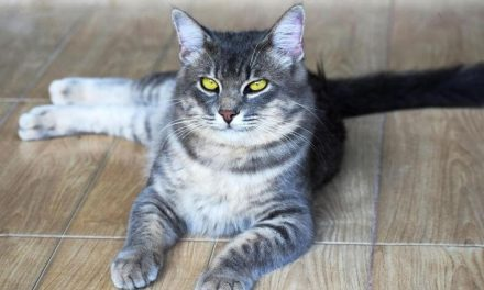What You Should Do If Your Cat Loses Balance Back Legs
