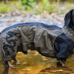 An Ultimate Guide To How To Make A Dog Raincoat