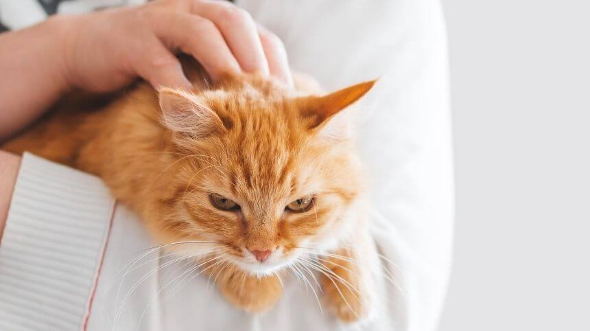 Why Is My Cat Clingy | Ultimate Secrets To Fix Clinginess In Cats