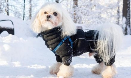 10 Ways to Keep Outside Dog Warm | Winter Care Guide for Dogs