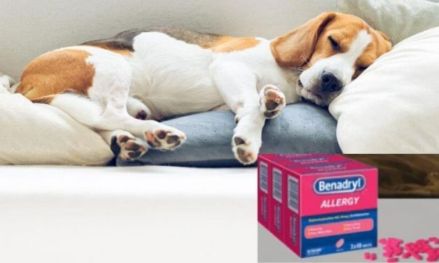 Putting a Dog to Sleep with Benadryl | A Complete Guide