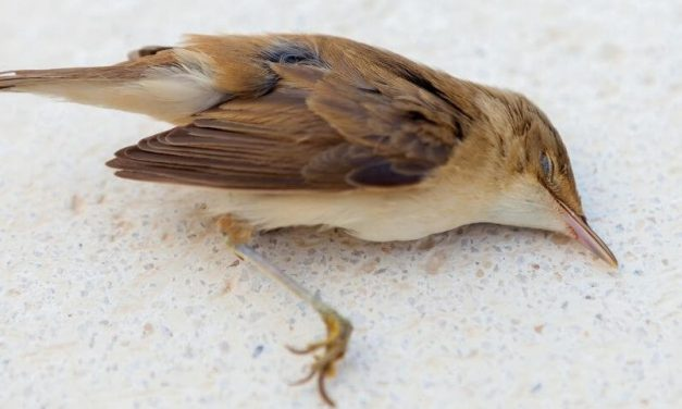 How Do You Know When a Bird Is Dying | Signs of Sick Bird
