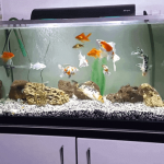 How to Cycle a Fish Tank | Tips for an Aquarium Cycle