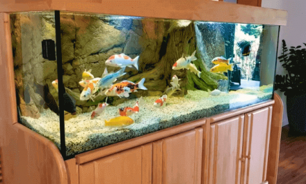 Starting a Fish Tank for Beginners | Aquarium Setup Guide
