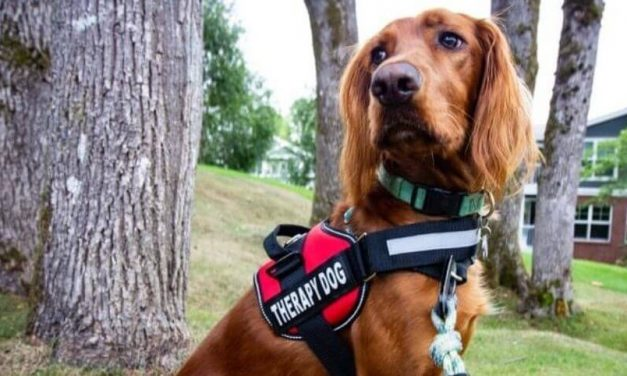 Best Breeds for Therapy Dogs Can Improve Mental and Physical Health