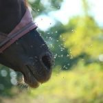 Know the Best Fly Spray for Horses That Really Works