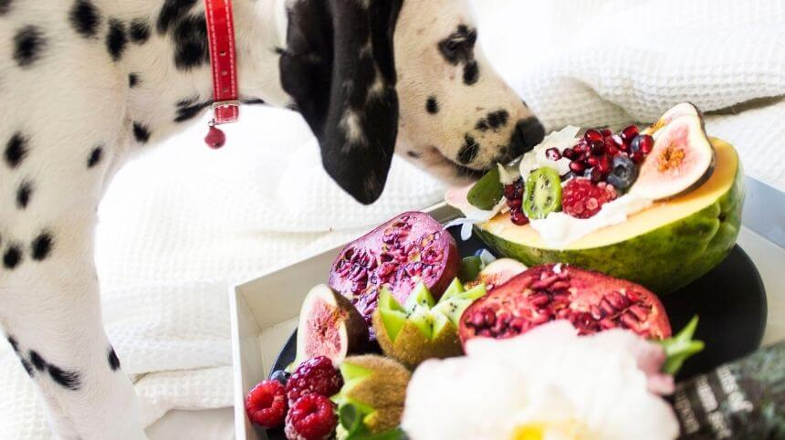 Fruits and Vegetables for Dogs Can or Can't Eat | Dog Food Ideas