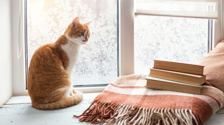 What Temperatures Do Cats Like | Tips to Keep Your Cat Warm