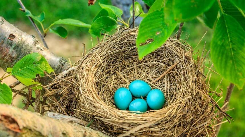 Why Are Robin Eggs Blue? | What Secrets Behind The Reason